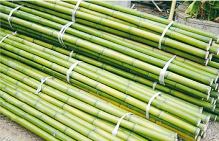 bamb l 39 acciaio vegetale dalle 1000 applicazioni